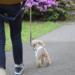 としまえん(豊島園)が想像以上に愛犬フレンドリーなの知ってました?