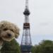 ペットと一緒に行ける!飛行機で北海道旅行へ行ってみた