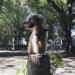 東京のドッグランといえばココ!原宿と渋谷の間に位置する代々木公園はやっぱり最高