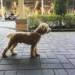 【2019年最新版】実際に体験した本音レビュー!ペット(犬)と行けるお出かけスポット一覧